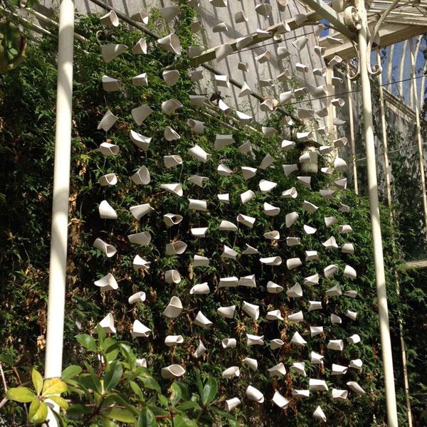 Jenny Pope, Banksia, National Botanic Gardens, Dublin
